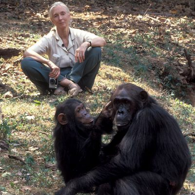 Guest Image - Dr Jane Goodall